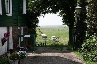 Amsterdam May 2008