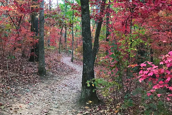 Sope Creek Trails in Autumn