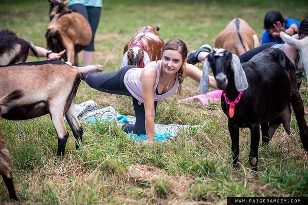 2018 (Aug) Goat Yoga / 90 Deg Yoga / Split Creek Farm