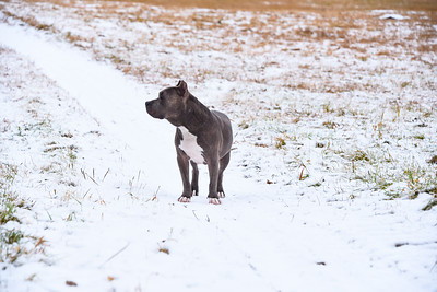 Pet Adventures in Snow!