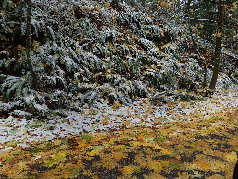PB030080 Mt Erie winter Fall forest.jpg