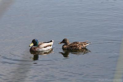 Birding in Ventura County
