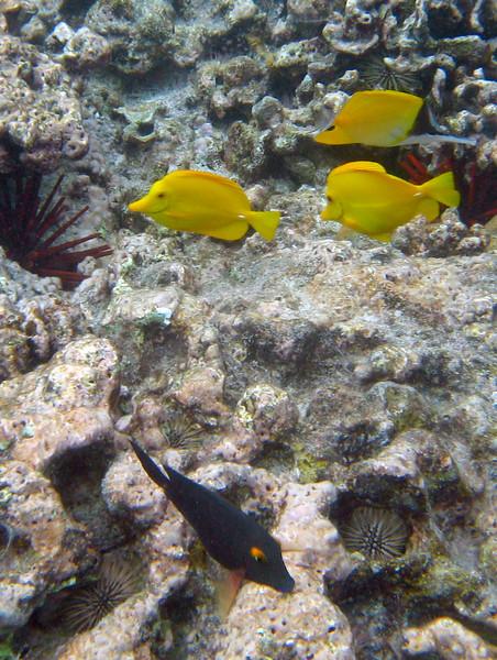 521- 20080416- Hawaii 20-Snorkelling IMG_0779.jpg