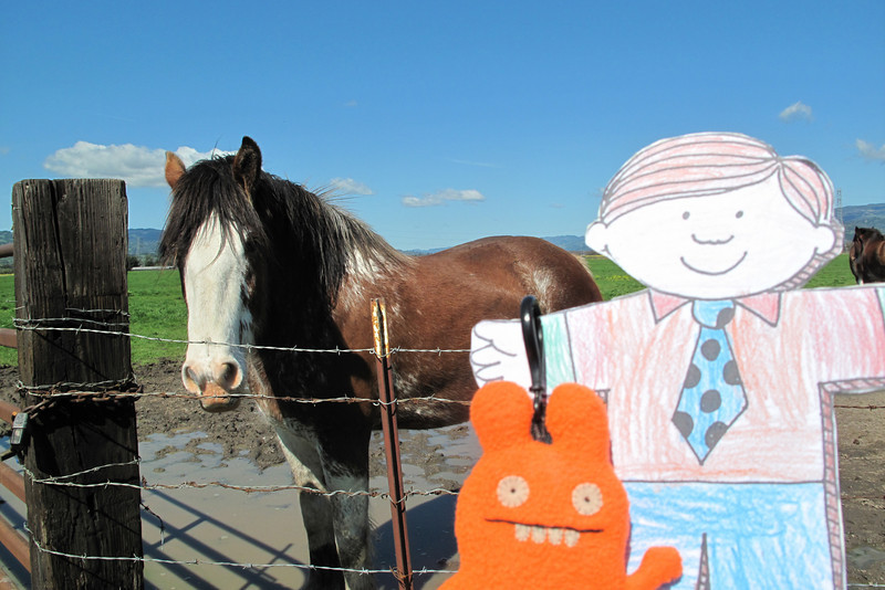 Flat Stanley and a really big horse