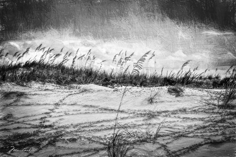 beach1-copy11-copy.jpg