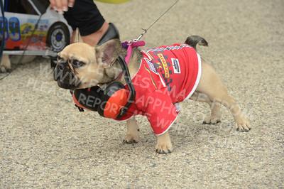 Pet Costume Parade