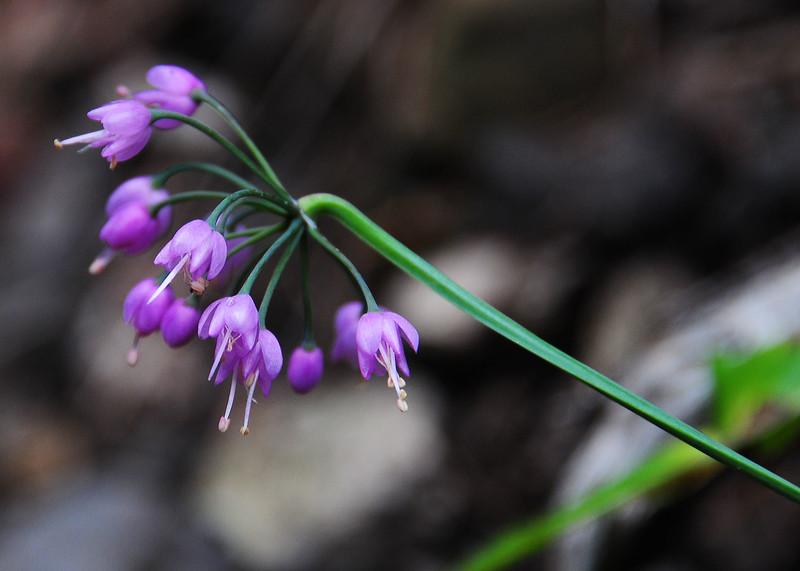 NEA_3076-7x5-Flower.jpg