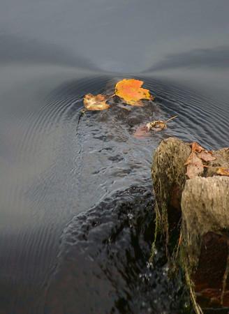 Still Life Water