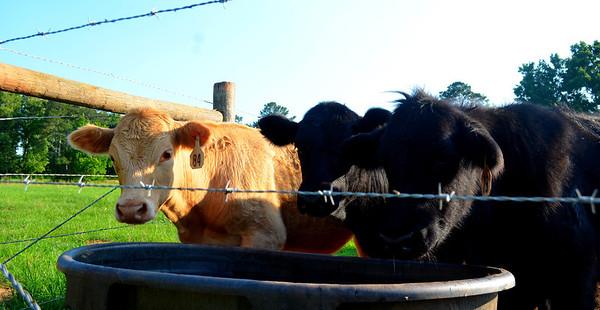 Summer Fun at One Day Farm