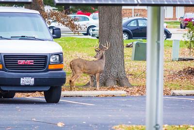 AIE 2015 Deer