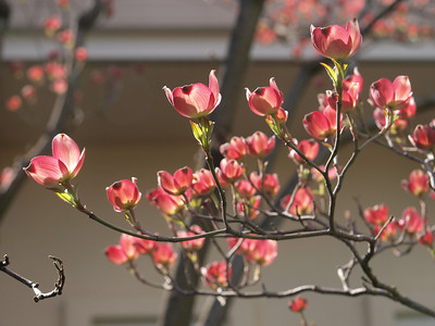 CA Spring 2013