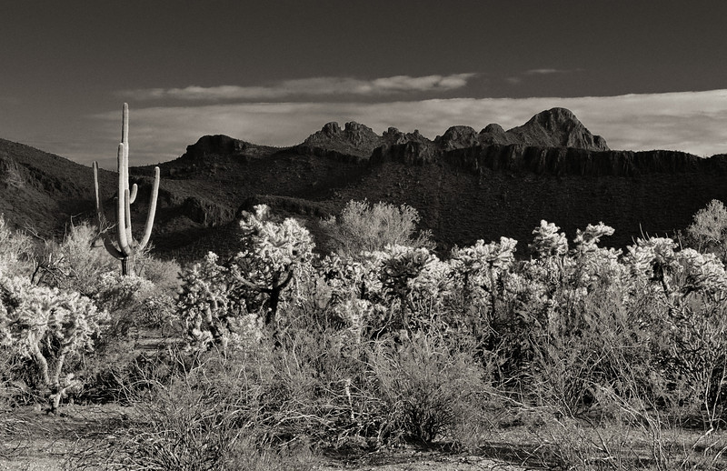 On an early morning hike just outside of Tucson, Arizona