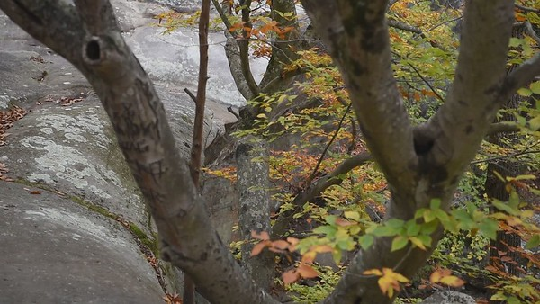 USA, IL - Shawnee National Forest