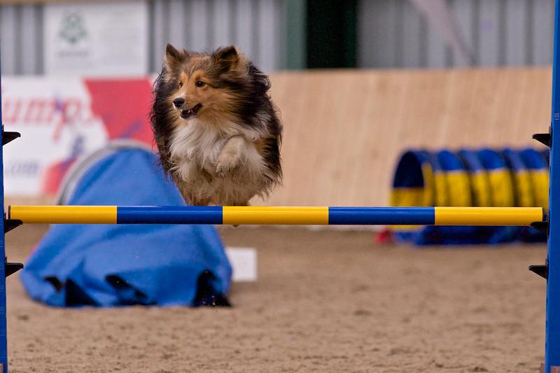 small dog final 1260.jpg