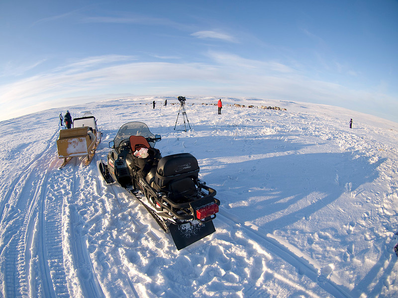 Fisheye of the group and reindeer herd.