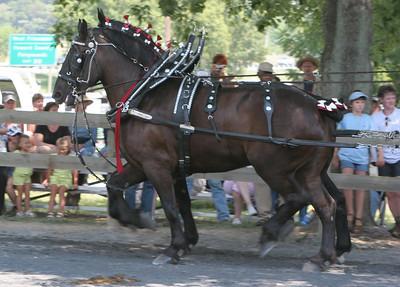 2006 Howard County Fair Draft Horse & Mule Show