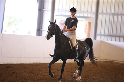 29. Texting While Trotting
