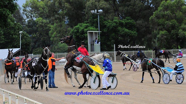 Penrith Paceway 19th February, 2015