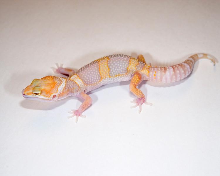 LG5015, $35, Tremper Albino, TSM, 22 grams