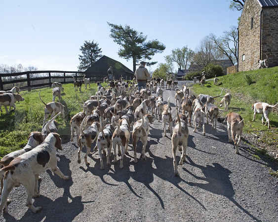 Walkout with Piedmont Fox Hounds