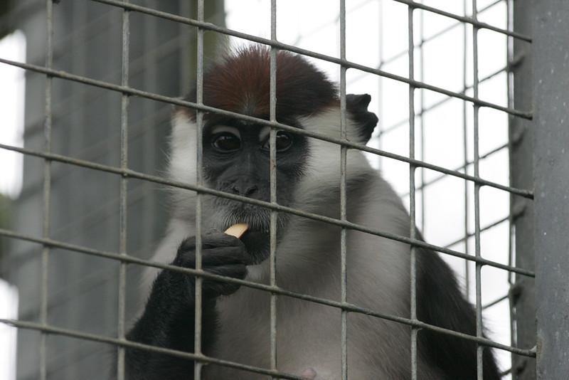 Newquay Zoo 374.jpg