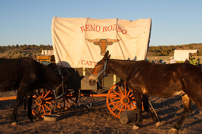 Reno Rodeo Cattle Drive - 2013