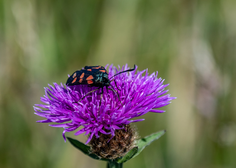 SWT_Seaford-Head-1580.jpg