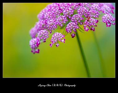 unknown flower-42