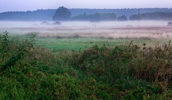 Meadows 2009
