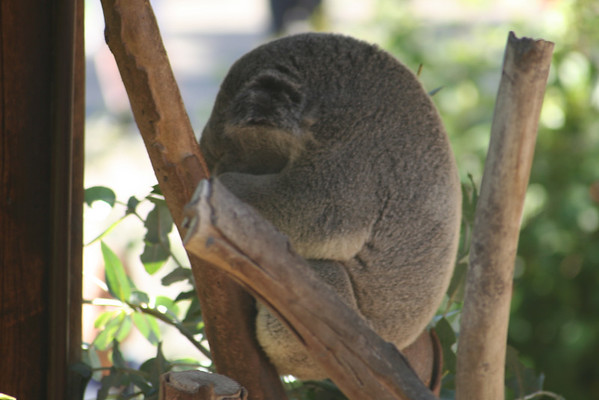 San Diego Zoo November 2007