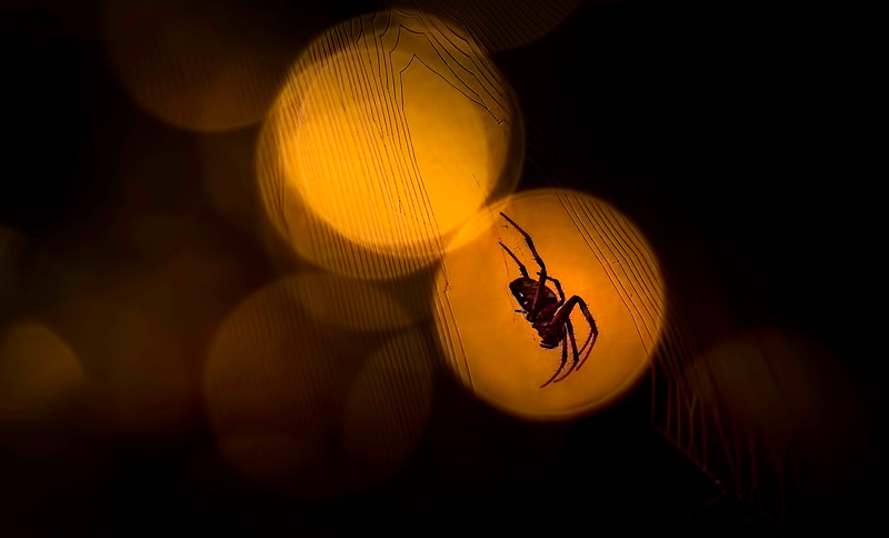 Spiders-Arachnids-140.jpg