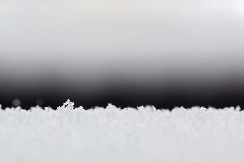 20160215 027 Snow - export.JPG