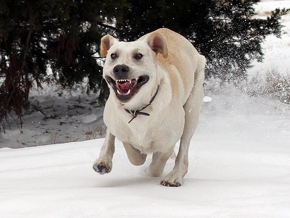 Crazed Dog On The Loose.jpg