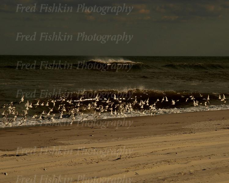 island beach wave birds.jpg