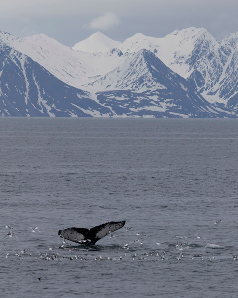 Inspirato-Arctic_Expedition18-03-Camp_Millar-0819.jpg