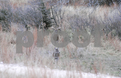 south-texas-deer-hunters-get-a-longer-shot