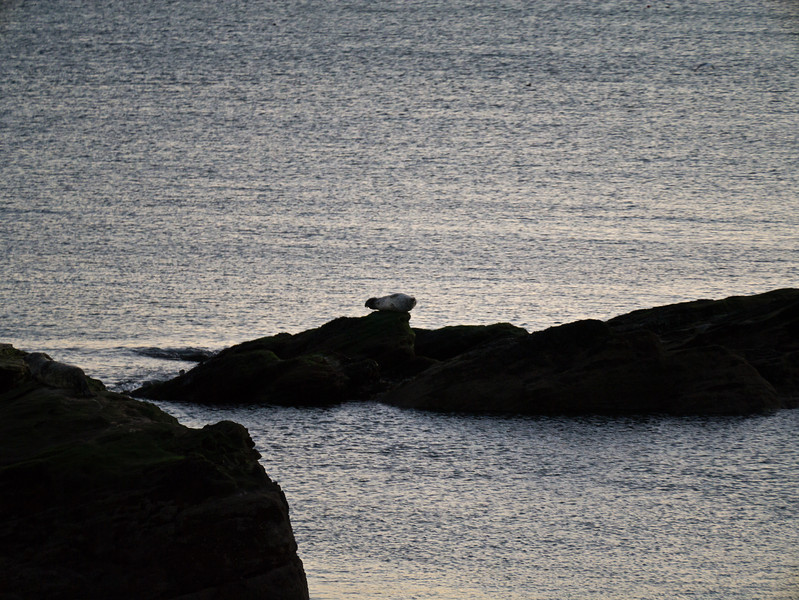 Seal by Seafield tower, only one on the day I went.