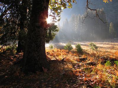 Yosemite 2010 C