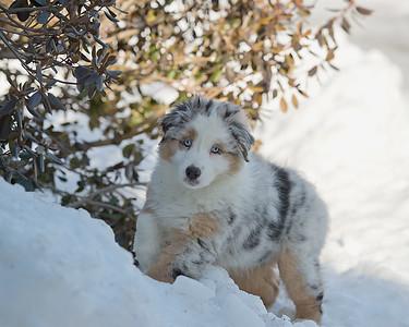 Snow Day 2-18-17