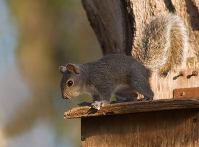 Squirrels 09