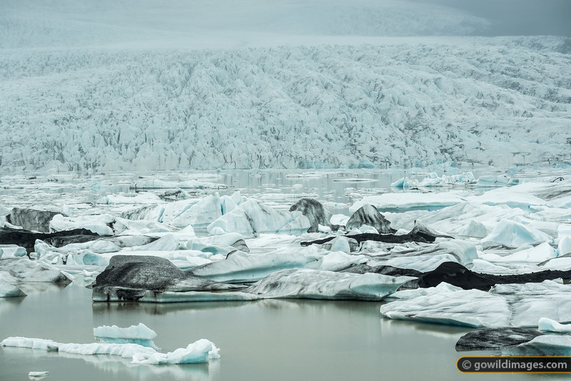 Fjallsjökull glacier breaks off into Fjallsárlón lake. The floating icebergs then flow down a river to the Atlantic Ocean