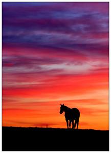 Kentucky Horse Farms