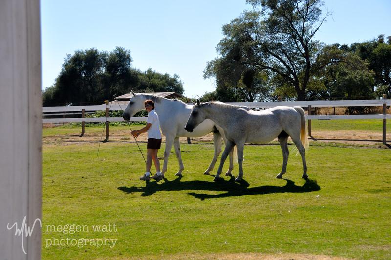 EB&Horses-147.jpg