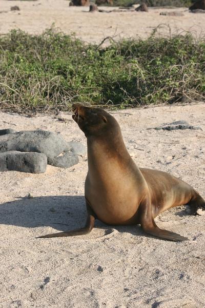 2007-02-20-0023-Galapagos with Hahns-Day 4, Floreana-Sea Lion.JPG