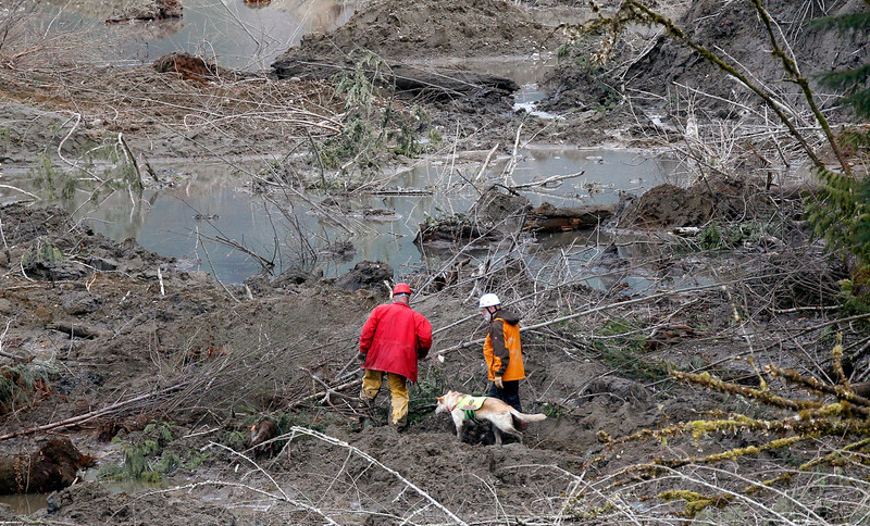 . Searchers and a dog walk through muck at the scene of a deadly mudslide, Wednesday, March 26, 2014, in Oso, Wash. Sixteen bodies have been recovered, but authorities believe at least 24 people were killed. And scores of others are still unaccounted for, although many of those names were believed to be duplicates or people who escaped safely. (AP Photo/Rick Wilking, Pool)