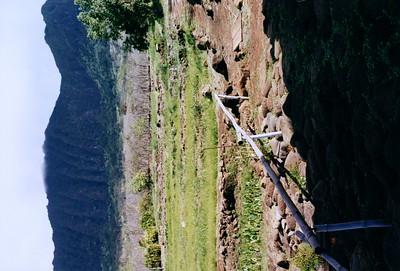 Waianae Taro Farm 1998