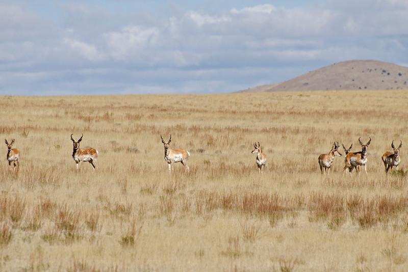 137 - Plains of San Agustin - Antelope.jpg