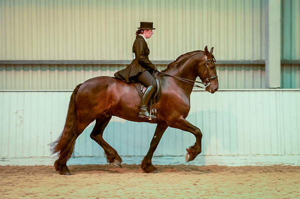Class 19 (Walk / Trot - Restricted)