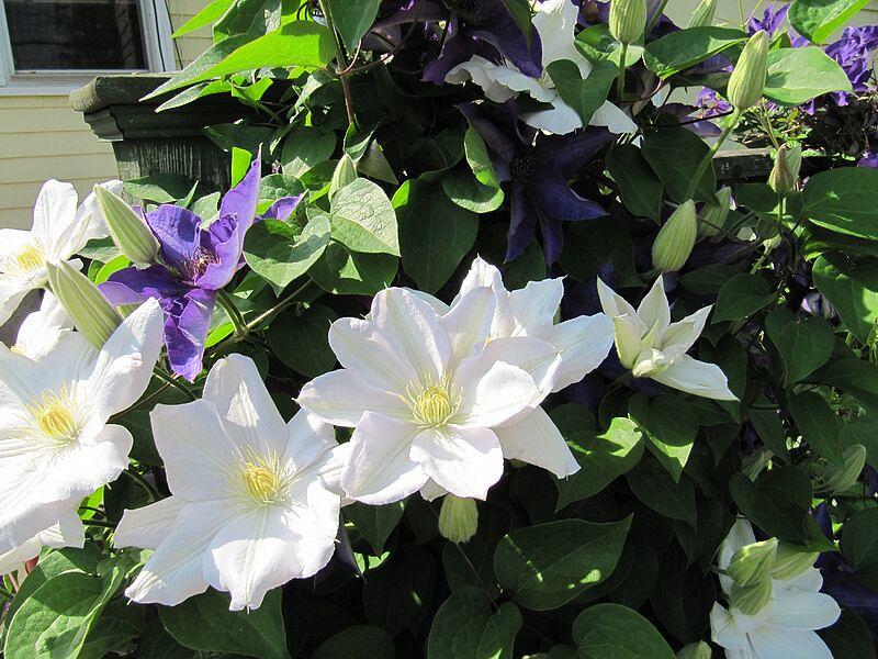 garden-2009-05-0659_std.jpg