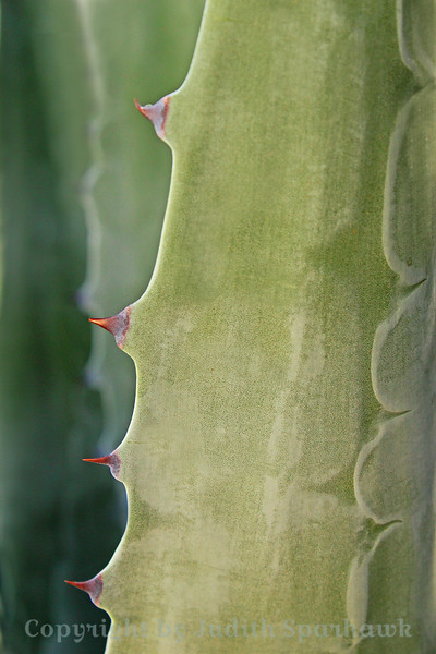 With Purple Thorns ~ The variety of colors and shapes of the succulent/cactus type plants made for a fun photo shoot.